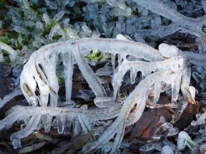 Ice sculpture Eaglehawk Hill 2 June 2015